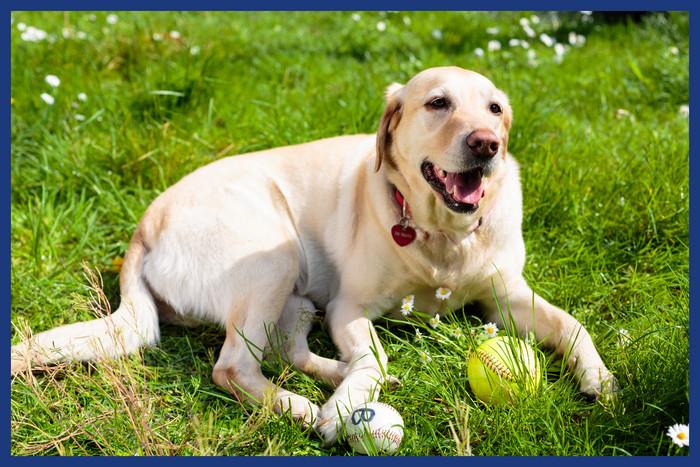 Giochi Di Pulire La Casa come pulire gli accessori e i giochi del cane | ace | ace